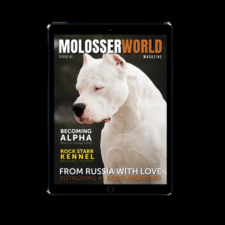 molosser_world4